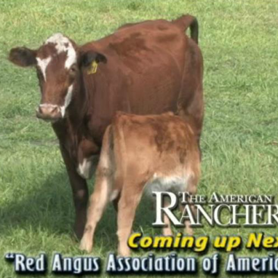 The American Rancher - RFD-TV